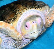 Loggerhead Sea Turtle by Rosalie Scanlon