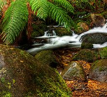 Cement Creek #3 by Jason Green