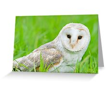 European Barn Owl Greeting Card