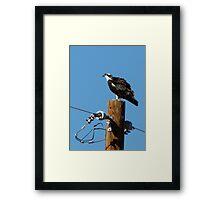 Osprey ~ Marana, AZ Framed Print