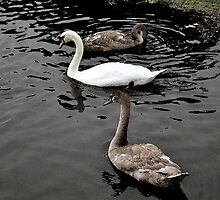 MOTHER AND BABIES  by NASEEM SULEMAN