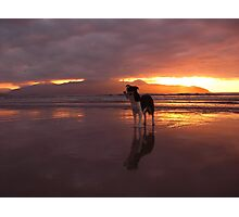 Dog on beach - The Maharees, County Kerry, Eire Photographic Print