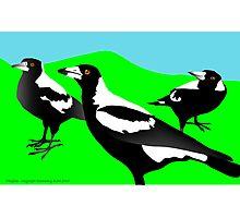 Magpies Photographic Print