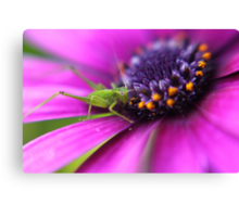 Little Spring Grasshopper Canvas Print