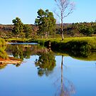 Finke River at Palm Valley by bettyb