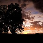 A Lone Eucalyptus Tree at Sunset by Michael Gay