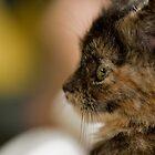 Kitten Profile - Animal Collection by Kate Krutzner