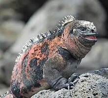 Laughing Iguana by mgeritz