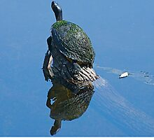 The Turtle and His Reflection by imagetj