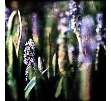 Pickerel Weed Photographic Print