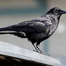 Crow Atop a Promising &quot;Food Bin&quot; by Wolf Read