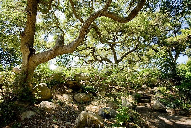 santa barbara botanical gardens coast live oak by kate