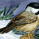 Winter Chickadee by Brenda Scott