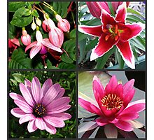 Vibrant Pink Summer Flowers Collage Photographic Print