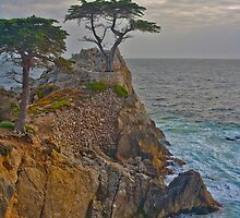 Lone Cypress, Monterey California by photosbyflood