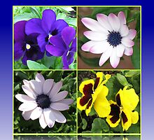 Pretty Pansies and Cute Cape Daisies Floral Collage by BlueMoonRose