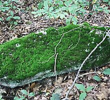 Rock and Moss Together by Kenric A. Prescott