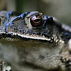 Portrait of a Toad by Dennis Stewart