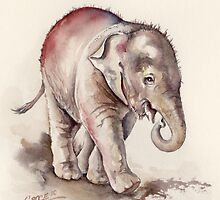 Young Mali the Elephant in Red by CroceDesigns