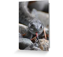 Lens Cleaner Greeting Card