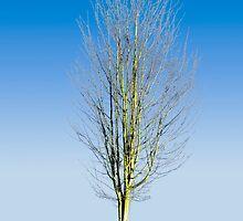 Justa Tree by James Zickmantel