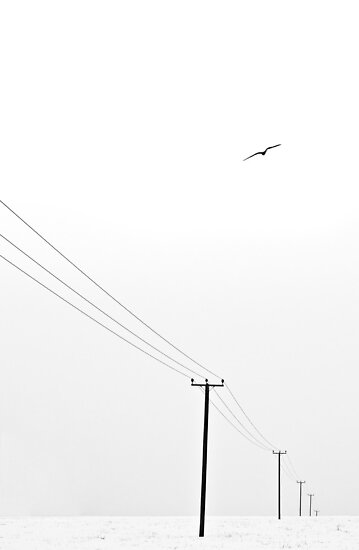 Free as a Bird by Squance