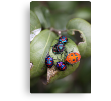 Bug Meeting Canvas Print