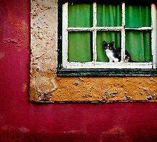 Cat in Lisbon by Laurent Hunziker