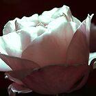 BLUMEN ÜBERALL....FLOWERS EVERYWHERE by Heidi Mooney-Hill