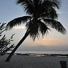 Palm Tree by mltrue