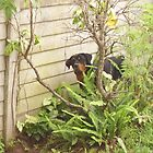 Hidden Rottie by Captain007