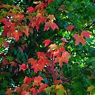 Early Autumn Colours  (1) by goddarb