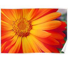 Orange Perfection #2 Poster