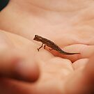 the tiniest chameleon - madagascar by mellychan