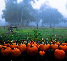 Pumpkin farm by Alana Ranney