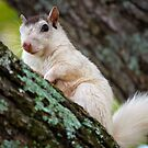 White Squirrel by Karen Peron