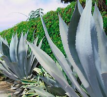 Agave Farm by James Zickmantel