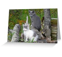 Shadow and Spook   Our Pets Greeting Card