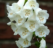 Treasure trove - gold flecked white foxglove by MischaC