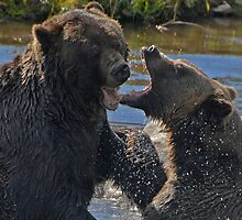Grizzlies in a Playful Mood  by Johannes  Huntjens