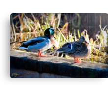 Duck Couple Canvas Print