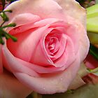Delicate Pink Rose by Wanda Raines