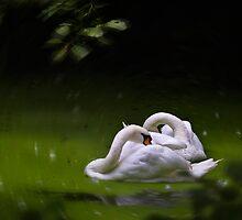 Swan Lake by Geoff Carpenter
