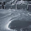 Winter solitude by Tomas Kaspar