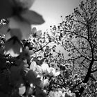 Rays Through The Blossom  by MichelleRees