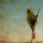 Bird on a stick by nefetiti
