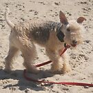 little oola on the beach by rue2