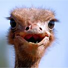 THE OSTRICH - Struthio camelus,  AND.... *What did I have for breakfast.....or lunch? by Magaret Meintjes