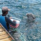 Louis the dolphin awaiting reward from trainer by mltrue