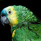 parrot by wendywoo1972